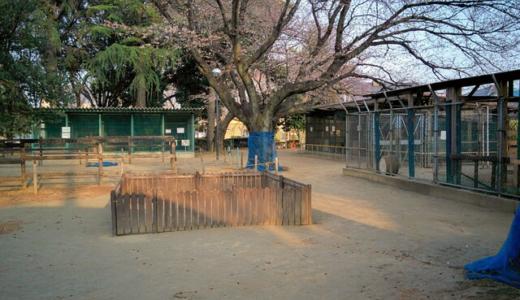 館林中央公園は子供が大喜び!動物・遊具が無料で楽しめます